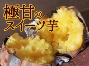 鹿児島のスイーツ芋 安納芋